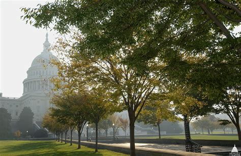 Trees on Capitol Grounds | Architect of the Capitol